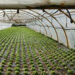 امسال ۹٫۵ هکتار گلخانه در شهرستان بهار احداث خواهد شد