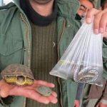 خرید و فروش گونههای جانوری و گیاهی وحشی ممنوع است