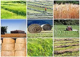 ۵ پروژه کشاورزی با اشتغالزایی برای ۵۲ نفر در بهار افتتاح میشود