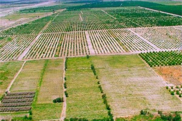 نام زمین های کشاورزی بهار