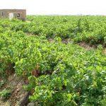 برخورد با ساخت و سازهای غیرمجاز در روستای میهمله علیا