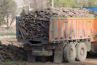 عاملان قطع درختان «بید» در شهرستان بهار به دستگاه قضایی معرفی شدند